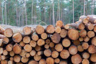 Ερωτήματα Αλοννησιώτη για την υλοτόμηση κατεστραμμένων δέντρων