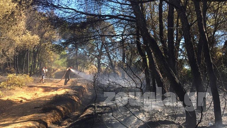 Σε εξέλιξη μεγάλη πυρκαγιά στο Κρυονέρι Αττικής